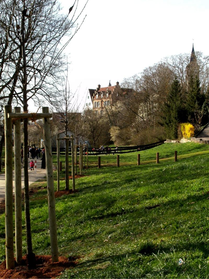 Links die neuen Bäume, im Hintergrund das Hochdorfer Schloss