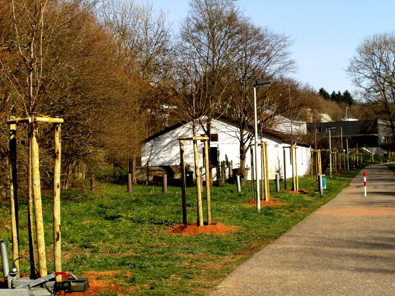 Von Hochdorfer Seite aus gesehen, links die neu gepflanzten Bäume