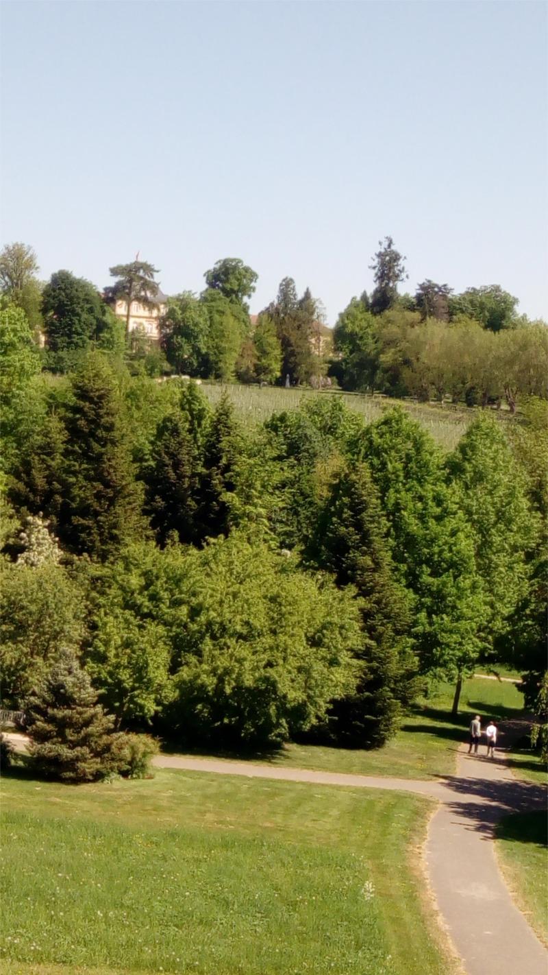 Blick auf das Schloss Hohenheim vom Monopteros im Landschaftsgarten
